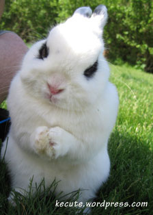 bunnyprayer.jpg