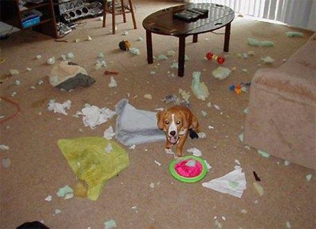 dog-mess.jpg