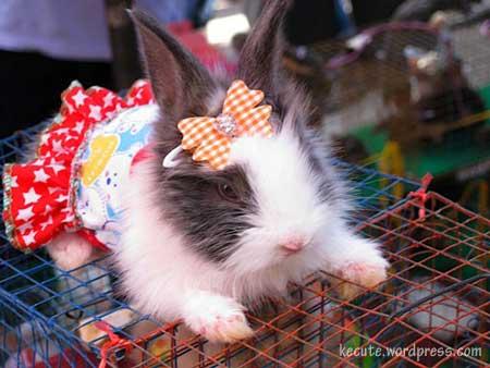 bunny-dress.jpg
