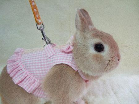 bunny-day.jpg