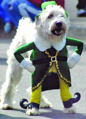 http://kecute.files.wordpress.com/2008/03/st-patricks-day-dog.jpg